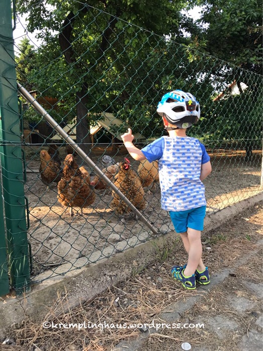 Spaziergang, Hühner, Laufrad, Kremplinghaus