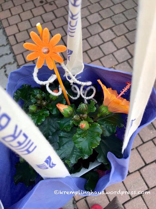 Blumen, Hibiskus, Kremplinghaus