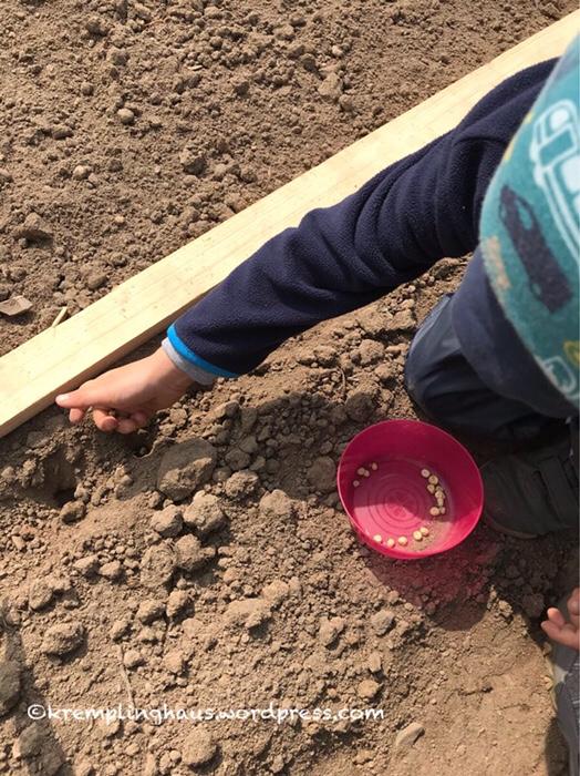 Garten, Kind, Erbsen, gärtnern, Kremplinghaus