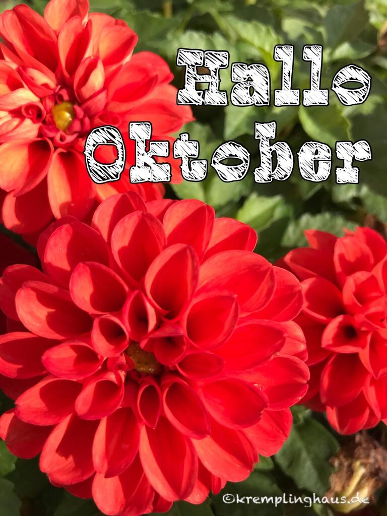 Oktober Dahlie
