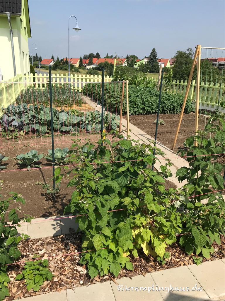 Blick in den Gemüsegarten