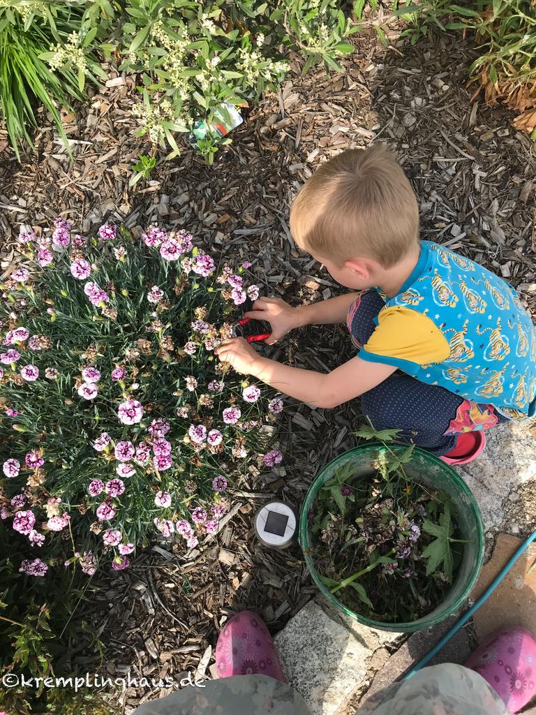 Verblühte Blumen abschneiden