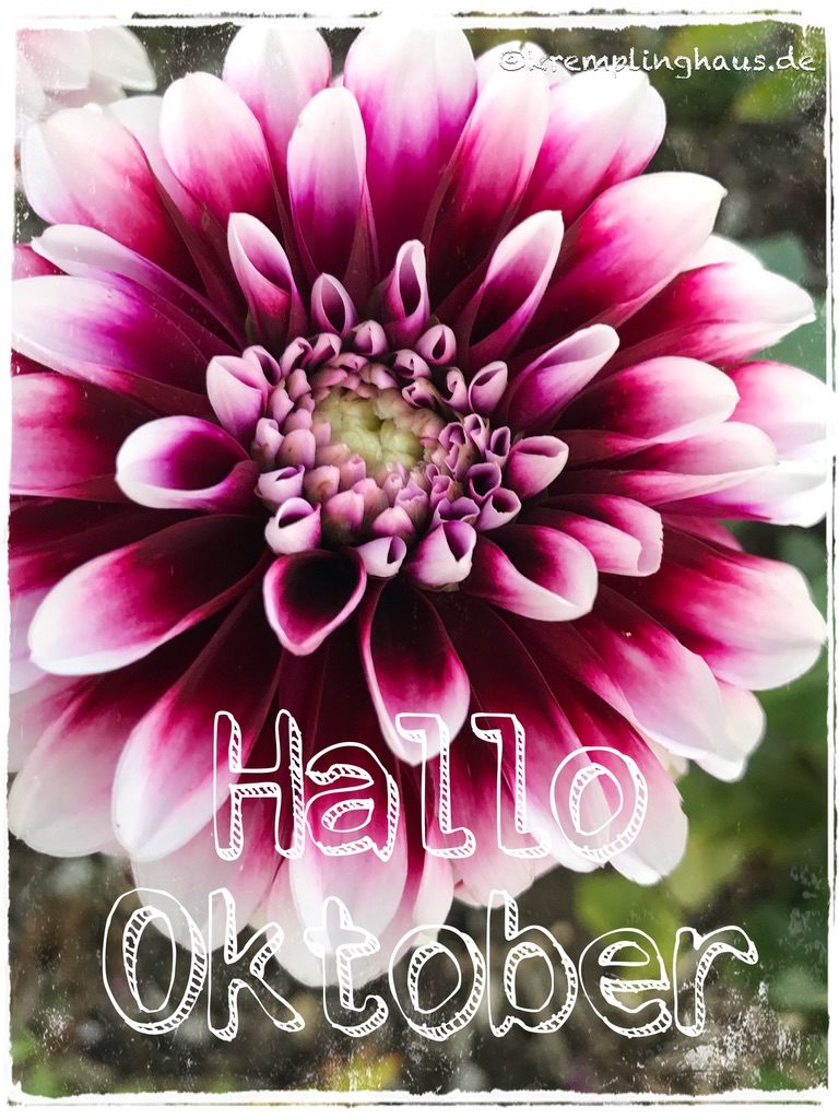 Hallo Oktober Chrysanteme