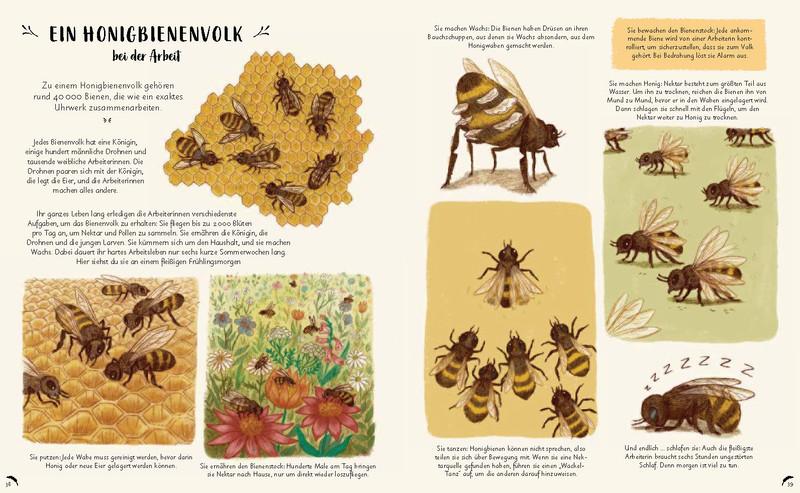 Buchinnenseite Wunder der Natur Bienen