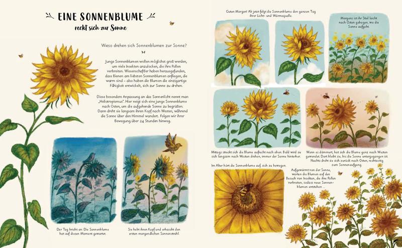 Buchinnenseite Wunder der Natur Sonnenblume